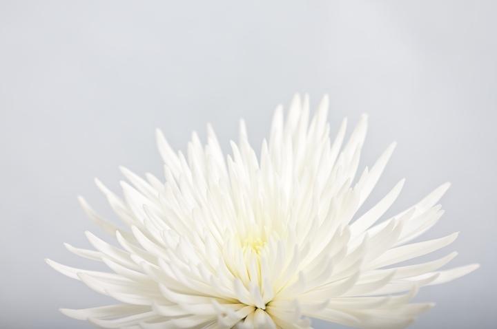 Kevin Charlie flower+inspiration